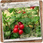Cranberries_02