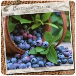 blueberries_01