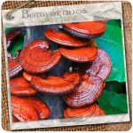 reishi_mushroom_powder_01
